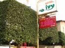 ivy(アイビー)A館